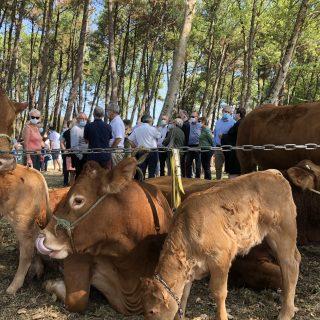 Journée départementale de l'élevage à Vieux-Boucau
